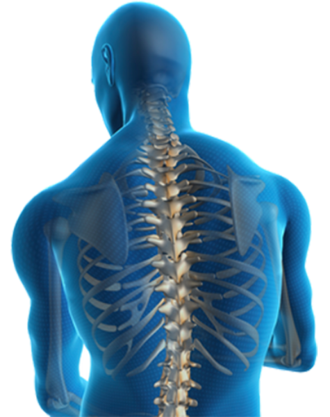 spinal-cord-png-3